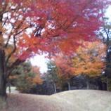 『紅葉の中を』の画像