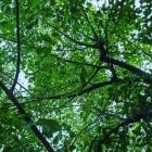 『五月の雨』の画像