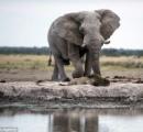 【画像】ゾウ「テメエに飲ませる水なんてねえ!」と、平和に水を飲んでいるだけのライオンを威圧する