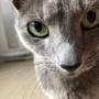 猫に近づいて撮影してみたら・・・