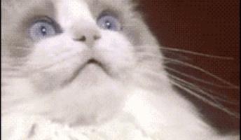 【急募】猫が「なんだこいつ」みたいにこっちを見てる画像くれ