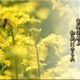 『蜜蜂の話』の画像
