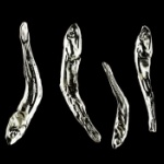 どうしてこうなった!「煮干し」が完全金属製の「メタルナニボシ」になってガチャに登場!