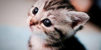 猫を飼うことになりワクチンを打つまで他の猫と接触させないようにしてるのに、母が病気持ちの猫をしきりに近づけてくる
