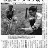 『(埼玉新聞)草原にトダスゲ咲く 戸田・道満グリーンパーク』の画像