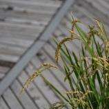 『米とぎ棒がスゴイ気に入ってしまった話。』の画像