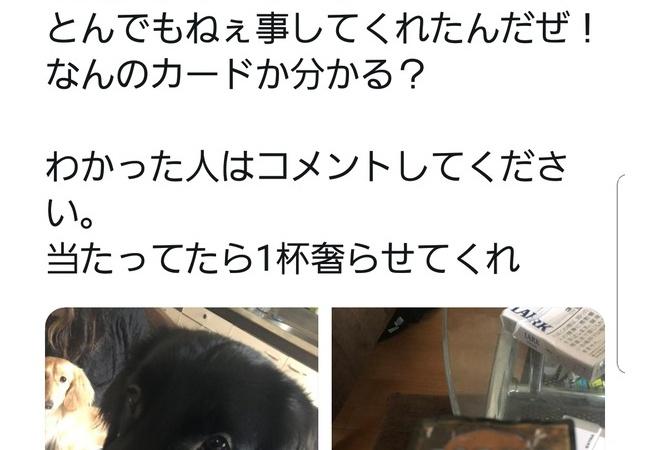 【悲報】やんちゃな犬さん、ブラックロータスを破壊してしまう