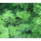 『新緑をめぐる』の画像