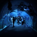 アラブ首長国連邦4日目:ドバイ水族館&水中動物園。。