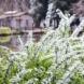 スマホでパチリ!1秒でお花の名前が判るアプリ「PictureThis」