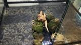 カエルさんの水槽作るンゴ → カエルも水槽も綺麗すぎwww(※画像あり)