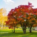 『晴れた日の紅葉Autumn leaves on a sunny day.』の画像