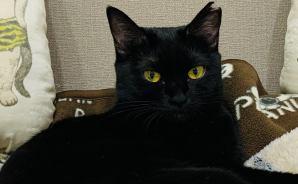 小さいのに「エラチョー」な猫