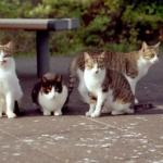 野良猫に毎日水かけてたらどれくらいで来なくなる?餌やり場所に来ないようにさせたい!