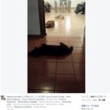 『犬のために人生を捧げた女性の葬式』の画像