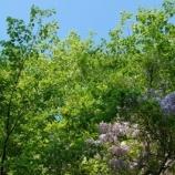 『花咲く道をゆく』の画像