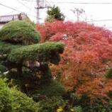『庭の花木;11月』の画像