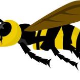 『ハチの巣が作られてて怖いんだが』の画像