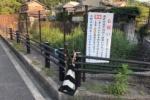 弓なりの杖や太いごぼう杖etc.杖がめっちゃある『杖スポット』がある!〜源氏の滝の近くの道沿いのところ〜