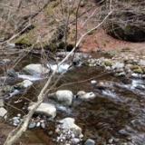 4/26(水)山梨県清里へ釣りと山菜採り のサムネイル
