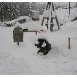 『本格的な雪』の画像