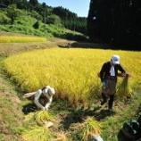 『稲刈り体験会とファッションショーのご案内』の画像