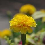 『東品川海上公園屋上庭園に行ってきました』の画像