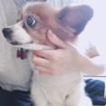 つばき浅倉樹々ちゃんが7日ぶりにブログ更新「髪の毛がないもん!」