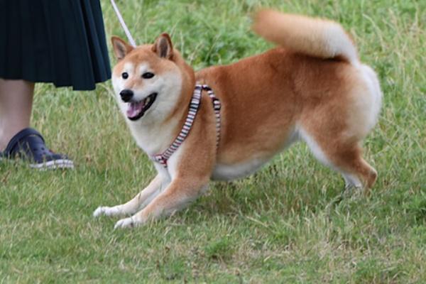 性 疾患 突発 前庭 犬の前庭疾患とは。原因や症状、介護の仕方などを獣医師が解説