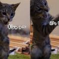 見えない敵と戦い続ける猫。さて何と戦っているのでしょうか?