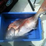 休日は若狭湾でボート釣り・・・2ndステージSE