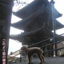 (新)犬連れ訪問宿【中国】