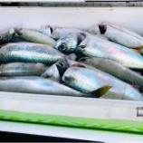 『徳島沖の磯にイワシが湧いている メタボサバ爆釣の巻き #ネトウヨ安寧』の画像
