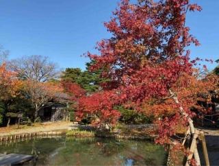まもなく紅葉シーズン突入!見頃前に新潟市内の紅葉スポットおさらい!『紅葉スポット2021』まとめ。