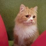 『【乃木坂46】猫の画像3連発w 佐々木琴子ブログ更新キタ━━━━━━(゚∀゚)━━━━━━!!!』の画像