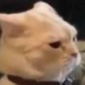 猫カフェに行ったら2匹ネコが向き合っていた。ケンカでも始まるのかな? → こうなった…