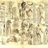 『昔の西洋と東洋の解剖図比較』の画像