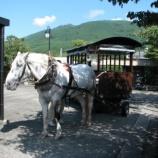 『ゆふいん観光 辻馬車』の画像