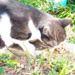地域猫ボランティア  【るーも】