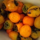 『上手に出きるか・恒例の干し柿』の画像