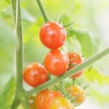 『NON GMOの意味とは?アイハーブの商品によく表記されているNON GMOって何のこと?』の画像