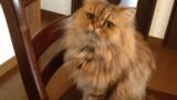 【助けて】うちの猫がやばい