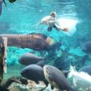 久々の屋島水族館。