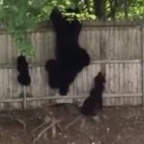 『クマの母と赤ちゃんたち』の画像