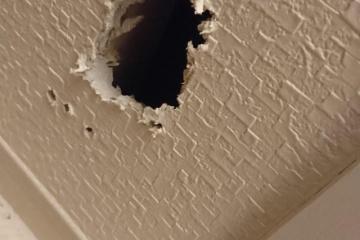 【救出劇】愛する文鳥が小さな穴から壁裏へ・・・飼い主さんがとった驚きの行動とは!(賃貸なのに・・・)