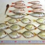 『国東の食環境(82)雑魚と呼べない雑魚』の画像