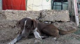 【メキシコ】炭鉱事故で亡くなった飼い主に再び会えることを信じて、3週間以上毎日炭鉱に通い続ける犬