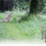 『鄙の畑の番犬ロッキー』の画像