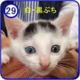 『里親募集【じろう】29』の画像
