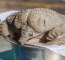 【画像】世界初の動物園生まれのハリモグラの赤ん坊が「キモチ悪いかカワイイか良く分からない」と話題に